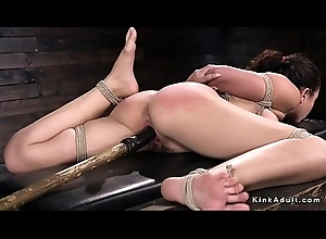 Gagged and hogtied babe pussy toyed